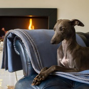 The Lounging Hound - Pure Wool Throw - Storm Blue