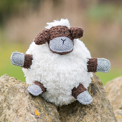 Shelby sheep 3