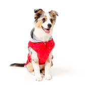 FuzzYard - Brooklyn Dog Hoodie