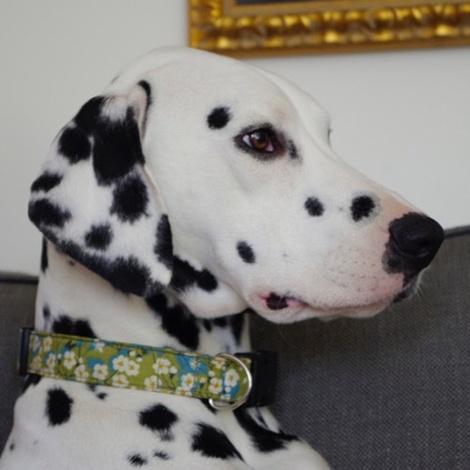 Tilly Liberty Print Dog Collar 2