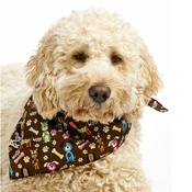 Pet Pooch Boutique - Woof Woof Dog Bandana