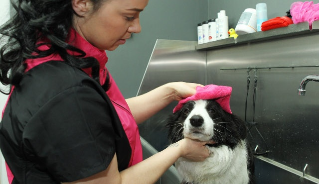 Pet Spa London 2