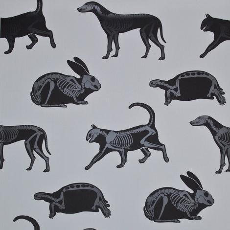 Animal Magic Wallpaper 9