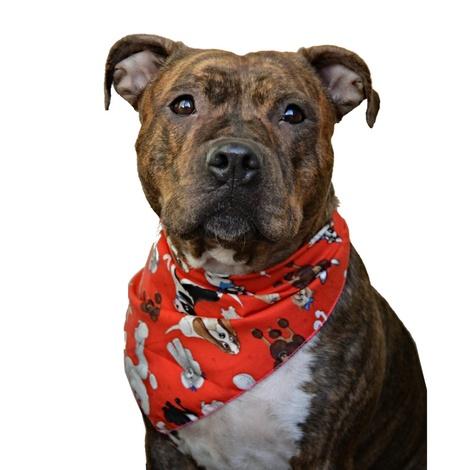 Mutley Crew Dog Bandana 2