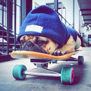 Top 10 Dogs You Have To Follow on Instagram!