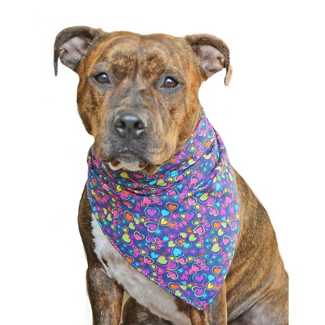 Bubblegum Hearts Dog Bandana