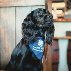 Spaniels Sev & Lily stay at The Cary Arms in Devon