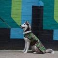 Pawditch Camo Dog Lead 6