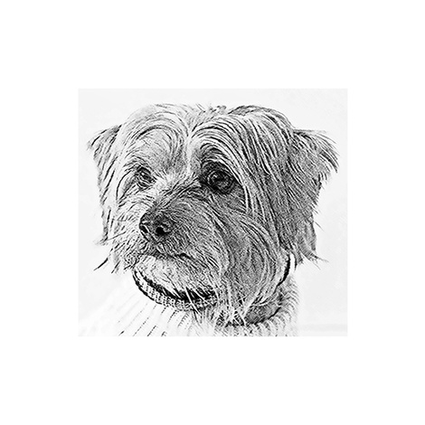 Sketch Effect Personalised Artwork of your Pet  2