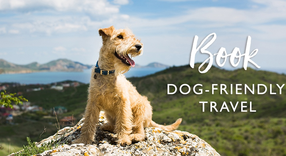 Pet-Friendly Travel