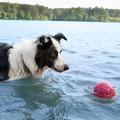 Zogoflex Air™ Boz Dog Ball – Blackcurrant 3