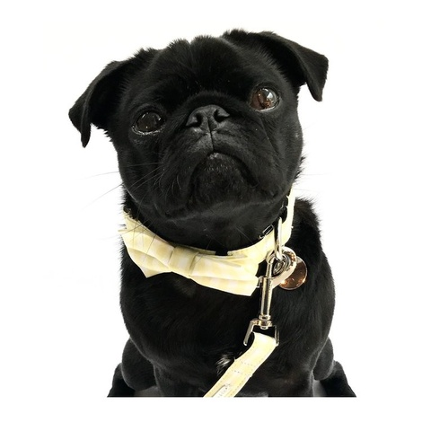 Collar, Bow Tie and Lead Set - Hampstead 2