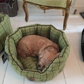 Tweed Oval Snuggle Dog Bed – Green 6