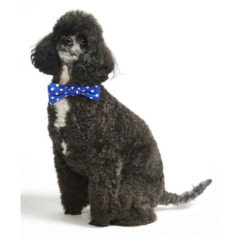 """Blue Polka Bowtie Dog Collar 1"""" Width 3"""