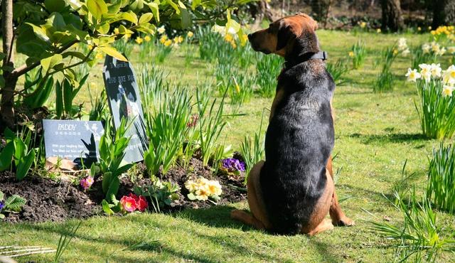 Dignity Pet Crematorium