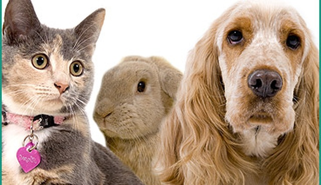 Ashley Veterinary Centre 2