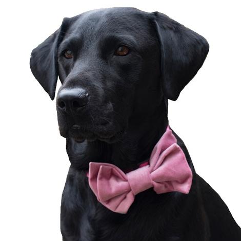 Pink Velvet Dog Bow Tie