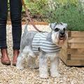 Flint Stripe Brushed Cotton Dog Harness 4