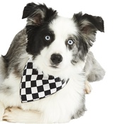 Pet Pooch Boutique - Check Dog Bandana