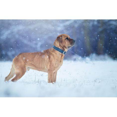 Leather dog collar (Rimini) - Midnight Blue 7