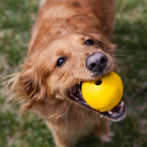 Huckama Dog Toy - Metolius Blue 6