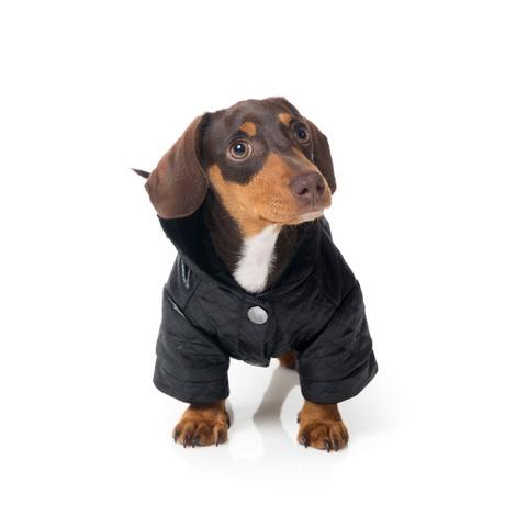 Yeezy Dog Hoodie 3