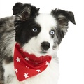 Red Star Dog Bandana  4