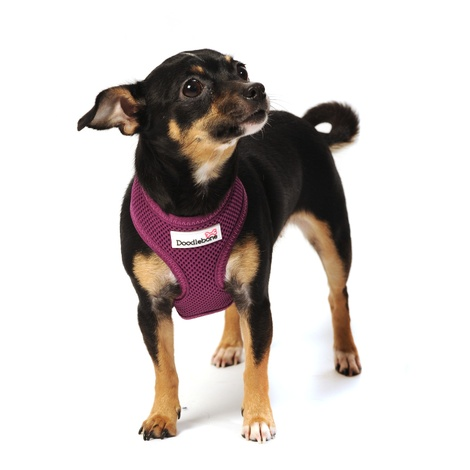 Airmesh Dog Harness – Purple