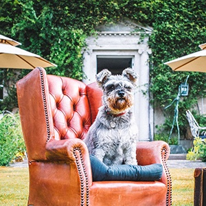 <strong>Pet Travel Edit</strong> Discover our top dog-friendly destinations for your 2019 staycation