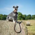 Comfort Rope Dog Lead – Black/Orange 2