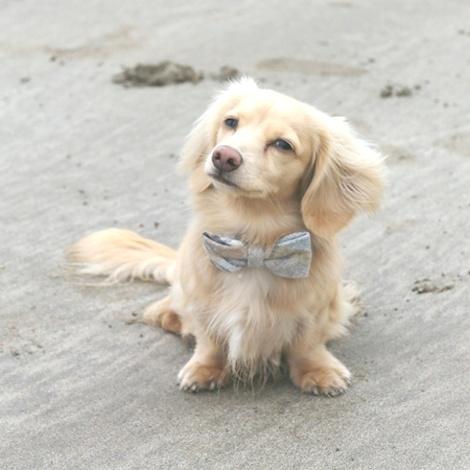 Sand Shetland Wool Dog Bow Tie 2