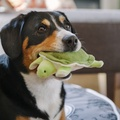 Green Sea Turtle Plush Squeaky Dog Toy 3