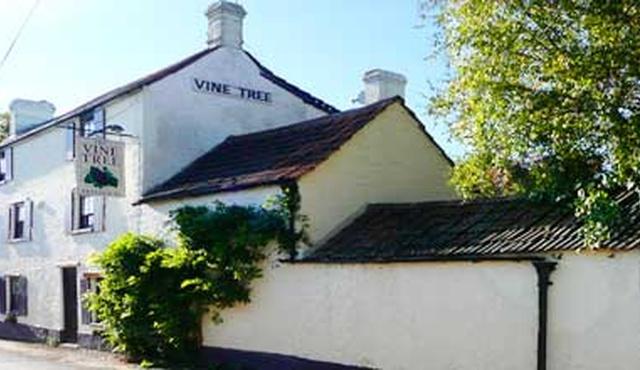 The Vine Tree 3