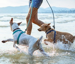 Inspiration 14: Coastal Canines
