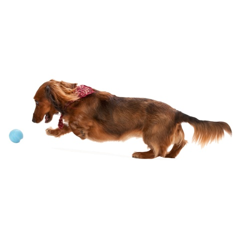 Zogoflex® Jive Dog Ball – Aqua Blue 2