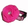 Bright Pink Dog Collar Flower  3