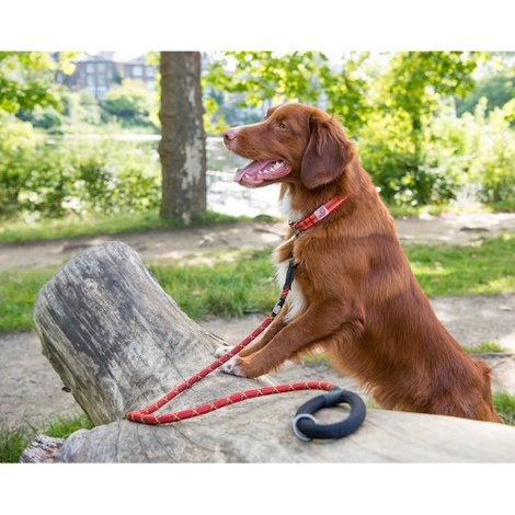 Comfort Rope Dog Lead – Orange 2