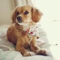 Multi Floral Slip On Dog Bandana 2