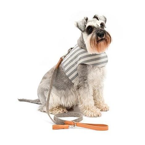 Flint Stripe Brushed Cotton Dog Harness 3