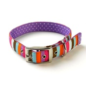 Yellow Dog - Multi-Stripe on Purple Polka Collar Uptown Range