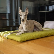 The Lounging Hound - Plain Dog Roll Bed - Olive
