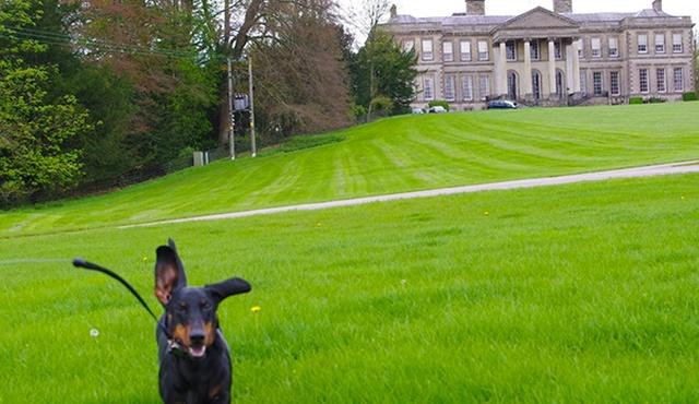 Ragley Hall Park & Gardens