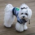 Grey YOLO Dog Hoodie 3