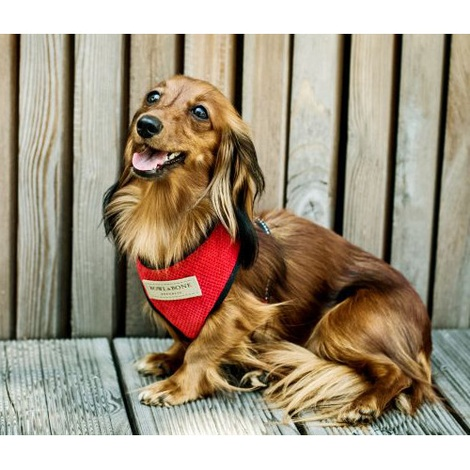 Candy Dog Harness - Red 4