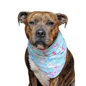 Pet Pooch Boutique - Molly Dog Bandana