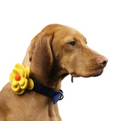 Love from Lola - Bloom Dog Collar Flower Accessory - Yellow & Amber