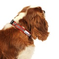 Bold Reflective Dog Collar – Red 3