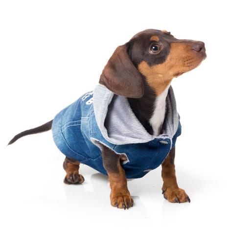 Crew Denim Dog Hoodie 2