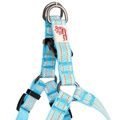 Comfort Dog Harness – Blue 2