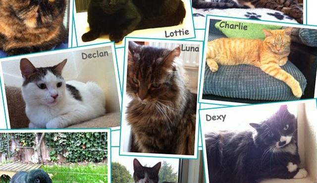 Kelly's Pet Care 2